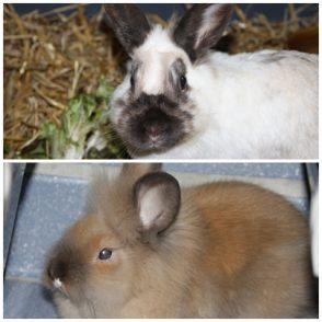 Mini et Mouni