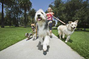promenade-chiens-full-7722133