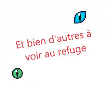D'autres au refuge
